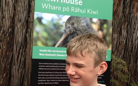 Kiwi Birds and Geysers