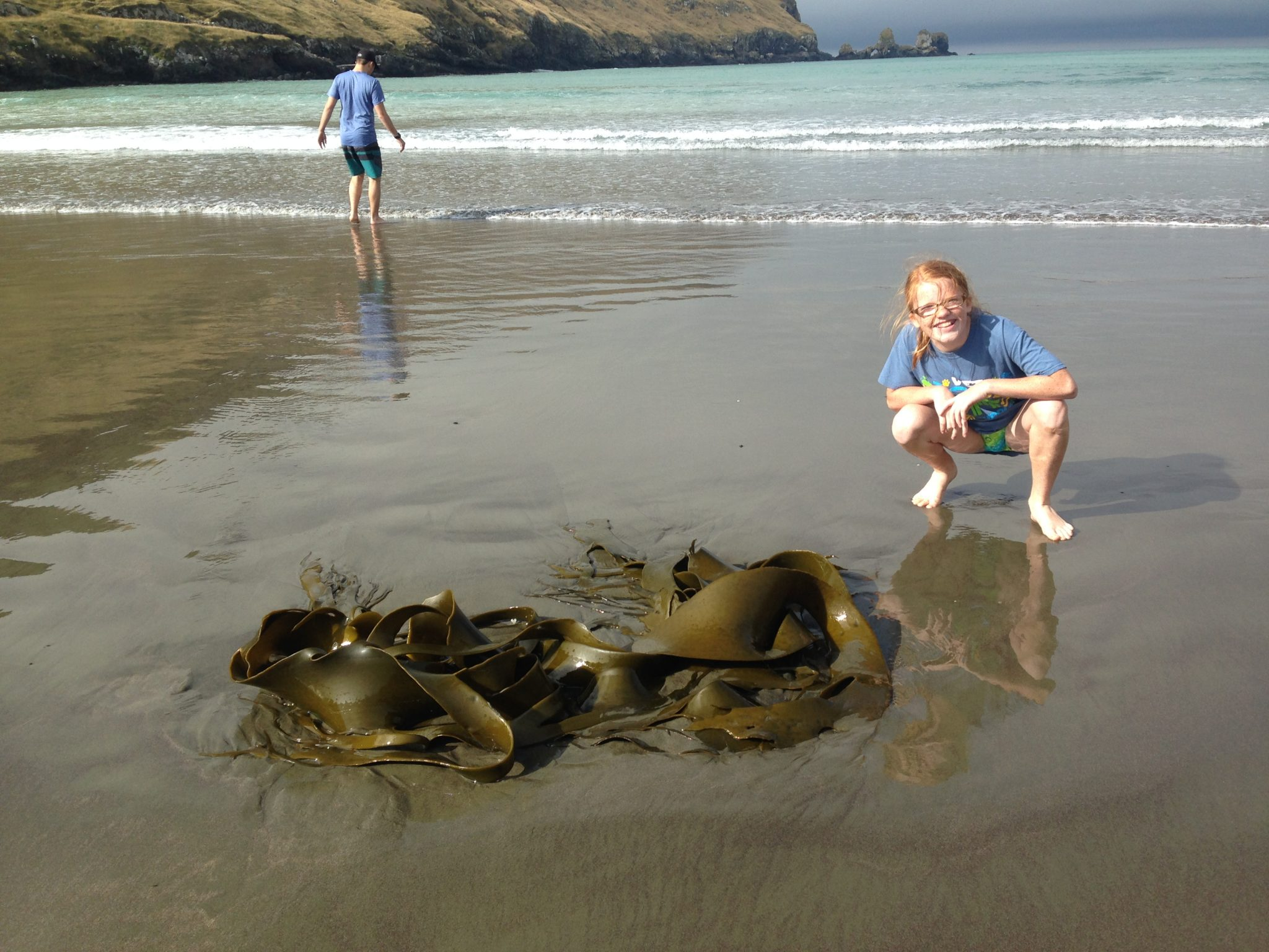The seaweed grows large off of the coast of New Zealand. This is Ella by some that has washed ashore in Lavericks Bay, Banks Peninsula, New Zealand.