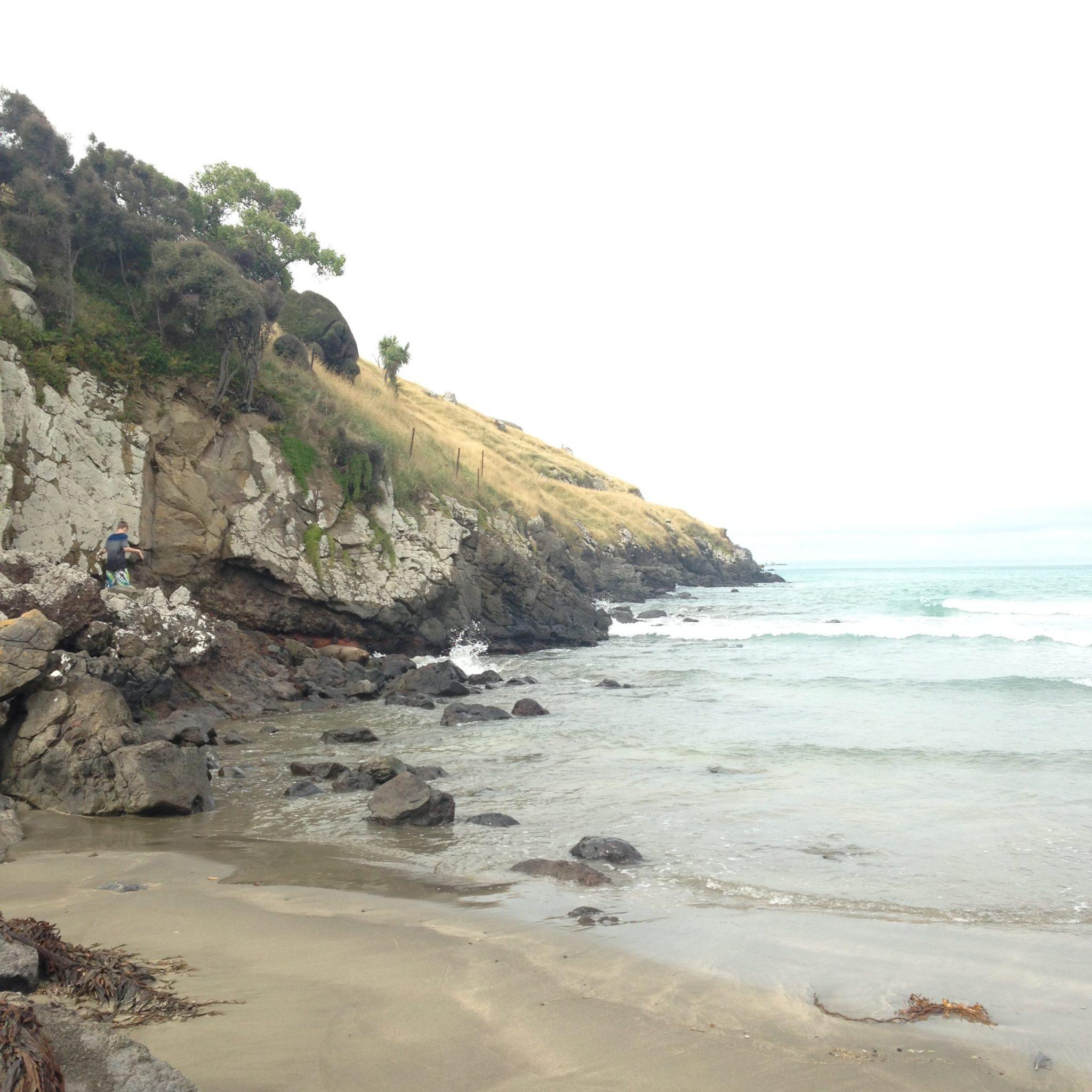 Seal, Lavericks Bay, Banks Peninsula, New Zealand.